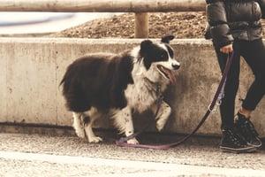 Walking dog with leash